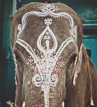 Los Seis Sabios Ciegos y el Elefante: la Naturaleza de la Mente