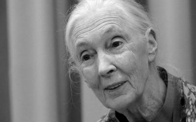 LAS PLANTAS SON IMPORTANTES, INCLUSO PARA NUESTRA VIDA ESPIRITUAL por Jane Goodall