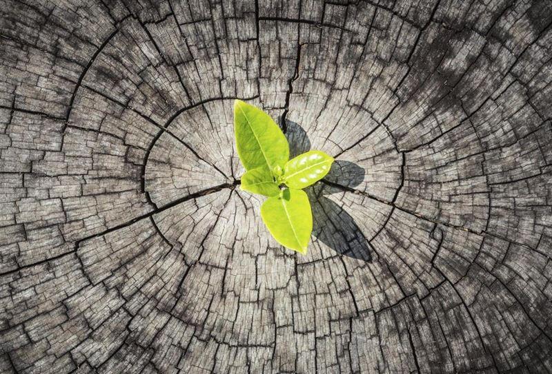 Resiliencia en el aula